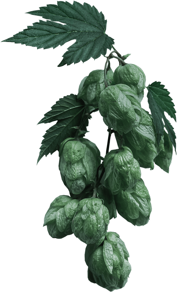 home_craftbeer_slider_hops.png
